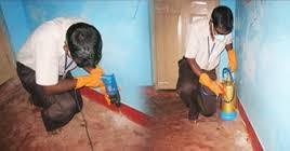 Anti-Termite Treatment1