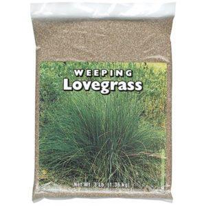 Weeping-Love-Grass-1